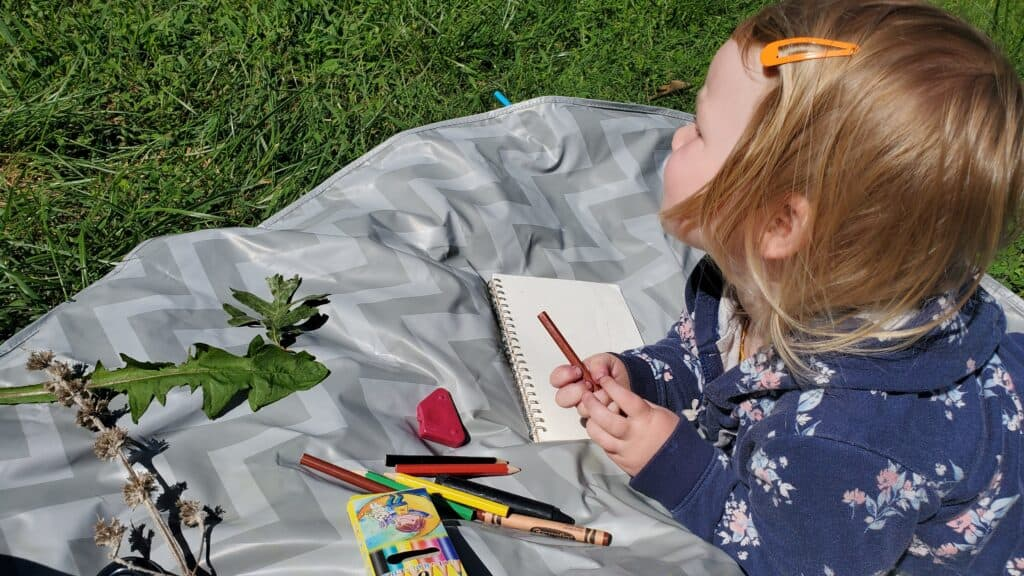 Nature journaling and drawing is an important part of our nature homeschool rhythms.